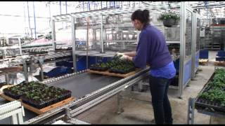 Wouters Nursery Part 1.mov