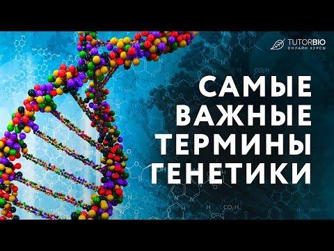 Самые важные термины генетики. Локусы и гены. Гомологичные хромосомы. Сцепление и кроссинговер.