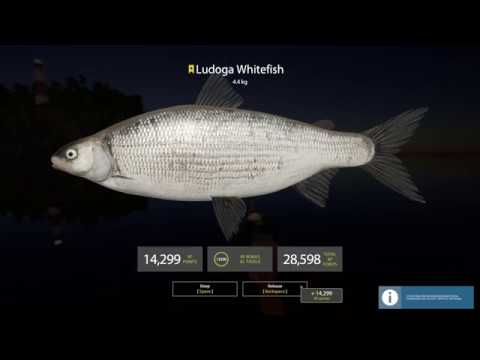 Russian Fishing 4, Ladoga Lake Trophy Ludoga Whitefish ...