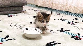 なぜかそわそわしてミルクを飲む子猫