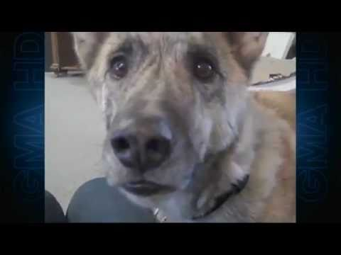 'ultimate-dog-tease'-video-becomes-viral-sensation-(episode-1)-|-cute-animals-|-abc-news