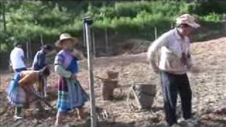Hmong China Farming Together