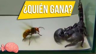 5 Batallas De INSECTOS Captadas En Video