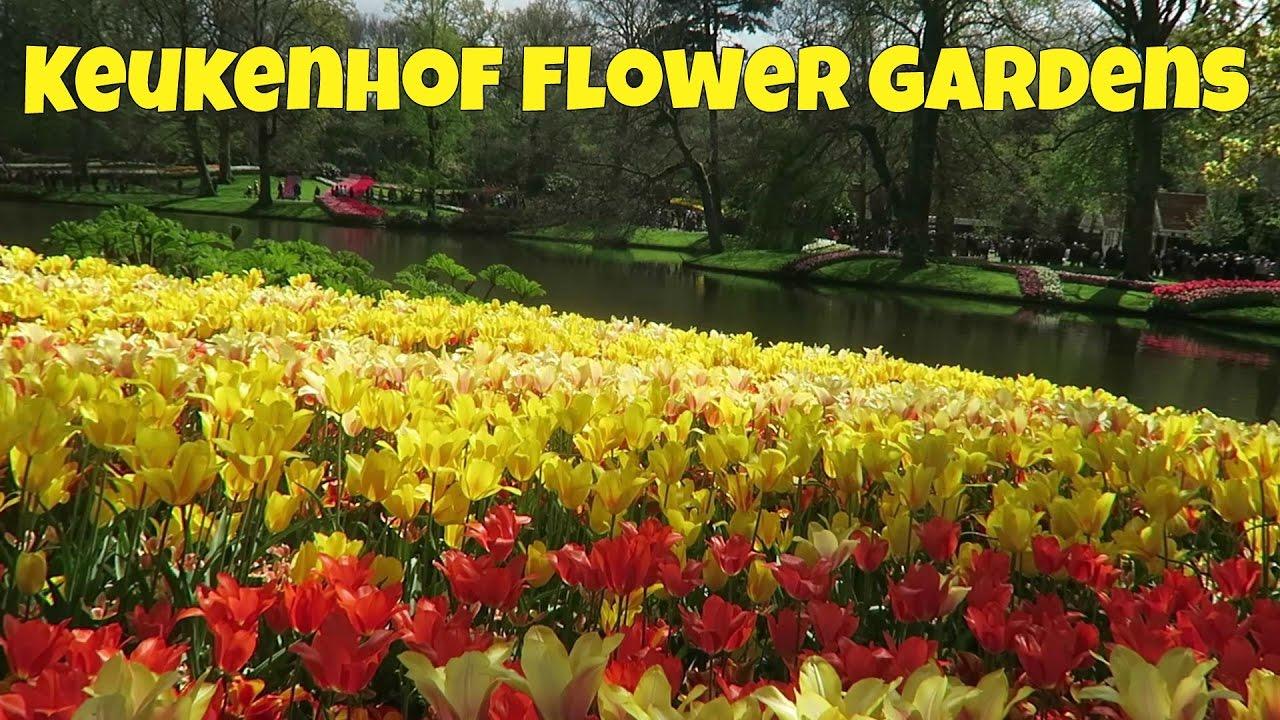 Tulips, Holland, Keukenhof Flower Gardens, Netherlands ...
