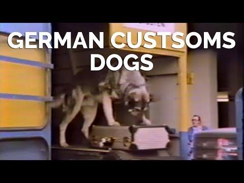 German Customs Dogs