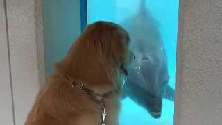 油壷マリンパークのイルカは犬が大好き! 嵐も会いに行って大ハシャギで...
