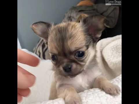 Top 10 Dog Breeds That Enjoy Cuddling The Most 🐶💖💘