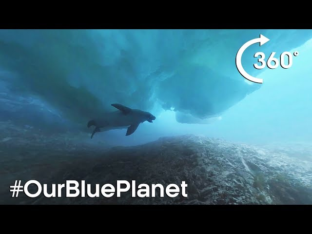 360° Diving Under Icebergs With A Seal In Antarctica #OurBluePlanet – BBC Earth