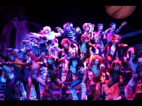 音樂劇 《CATS 》香港預演  Prologue + The Rum Tum Tugger + Memory|ON!文化 Culture-ON
