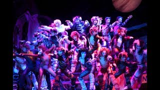音樂劇 《CATS 》香港預演  Prologue + The Rum Tum Tugger + Memory|ON!文化 Culture-ON