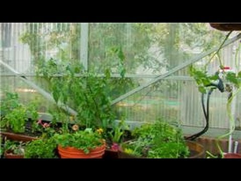 Vegetable Gardening : How To Garden Vegetables In A Greenhouse   YouTube