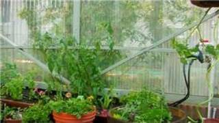 Vegetable Gardening : How To Garden Vegetables In A Greenhouse