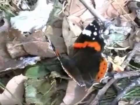 nature nurata