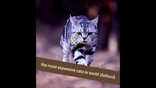 #smart cats#expansive cat in world 2billion$#short for video
