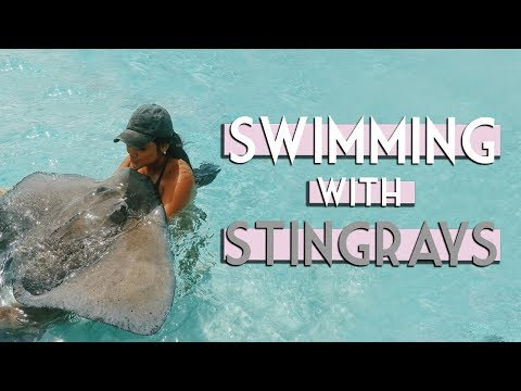 SWIMMING WITH STINGRAYS | Grand Cayman 2017