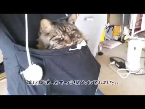 にゃんガルーパーカーがお気に入りの猫ぎんじろぅ。。の巻