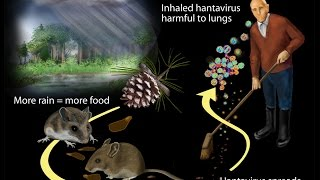 Hantavirus Infection