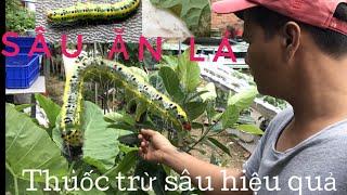 |5|CÁCH LÀM THUỐC TRỪ SÂU SINH HỌC tại nhà đơn giãn!(phần 1) trừ sâu ăn lá! | Biological insecticide