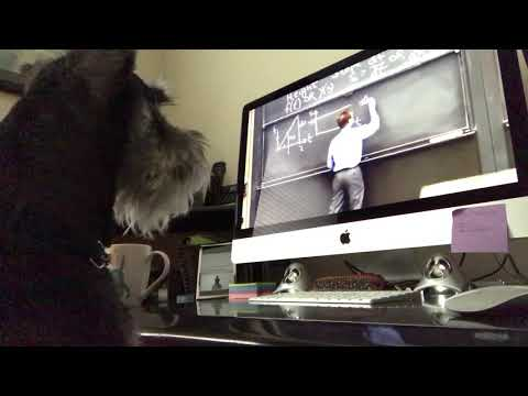 Schnauzer learning calculus