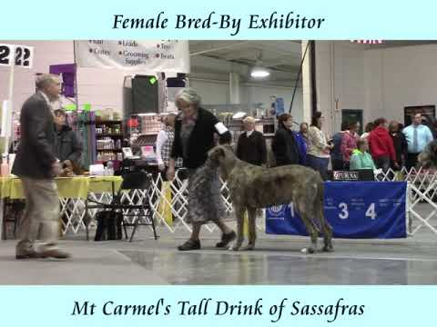 11-12-2017 Ozarks Kennel Club - Springfield MO - Irish Wolfhounds