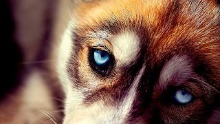 Выбирают самую красивую и умную в мире собаку