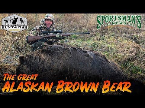The Great Alaskan Brown Bear   SNTV