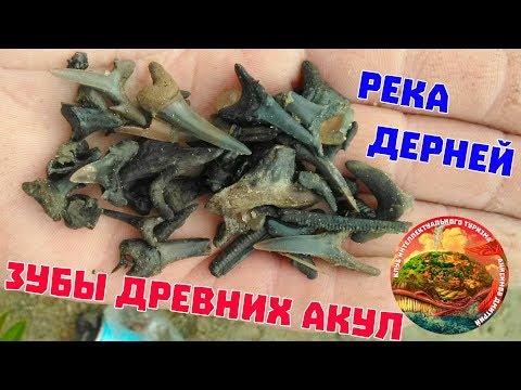 река Дерней, зубы древних акул, позвонки доисторических акул, поиск зубов в реке, село Боровлянское