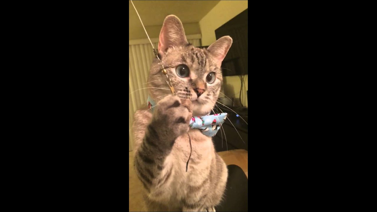 Youtube Cat Eye Tutorial: Nala Cat