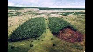 TRAVIVAĴO DE KNABO EN SOCIA MIZERTRAFITECO, KAJ LA KAZO AMAZONIO