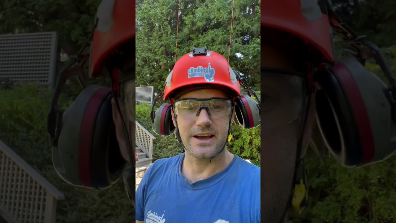 One in a million tree pruning client
