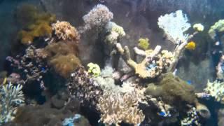 Tatralandia - Akwarium w basenie