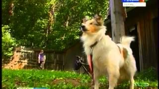 видео Дрессировка собак Как приучить щенка к туалету