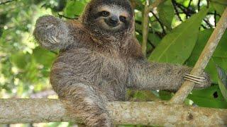 Dangerous killer animals & Amazon rainforest Tribe/Jungle ka Rahasya/Amazon Forest Tribe