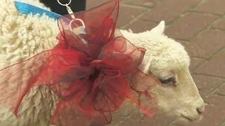 Baranek za kozę; świąteczne prezenty zaprzyjaźnionych gmin (Puls Polski TVp Info, 20.04.2014)