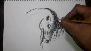how to draw horse face
