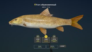Русская рыбалка 4 РР4 Озеро Медвежье Турнир Усач голд наживка