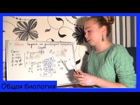 Урок биологии №26. Генетическая задача на дигибридное скрещивание.