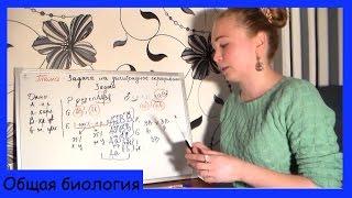 Урок биологии №26. Генетическая задача на дигибридное скрещивание.(Подробный разбор и решение задачи на дигибридное скрещивание., 2014-10-13T16:33:56.000Z)