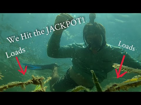 We hit the Jackpot - Crystal River