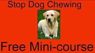 **asap** Stop Dog Chewing Garden Furniture - Free Mini-course To Stop Dog Chewing Garden Furniture