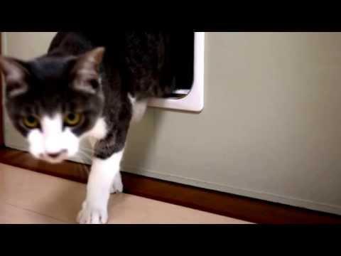 cat mate cat flap, cat flap, cat flaps,cat25.net,cat25net,猫ニャーゴ
