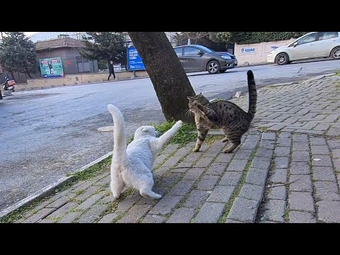 The angry White Street Cat attacks everything in its path