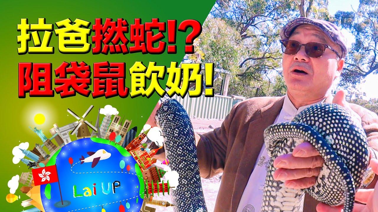 拉爸撚大蛇!拉哥阻袋鼠飲奶!《拉住爸爸去旅行 - 澳洲》Ep.5