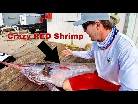 CRAZY RED SHRIMP Turns Swordfish Orange! How To Clean A 280 Lb Pumpkin Swordfish!