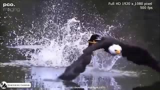 Niezwykłe ataki zwierząt