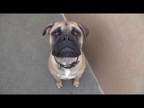 Building A Dog Kennel: Kennel Run Design, Efficiencies & Safety