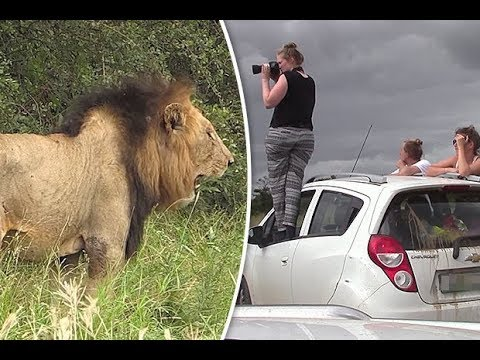 Fatal Safari   Compilation of rugged safaris – safari compilation