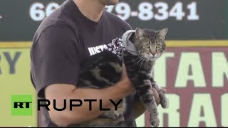 Repeat youtube video USA: Hero's welcome for brave cat saviour