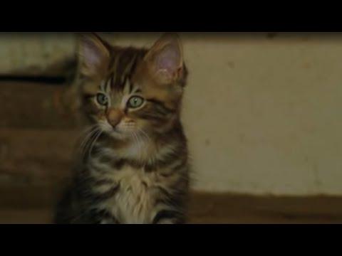 Cute Killer Kittens | BBC Earth