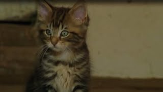 Killer Kittens! | Predators | BBC